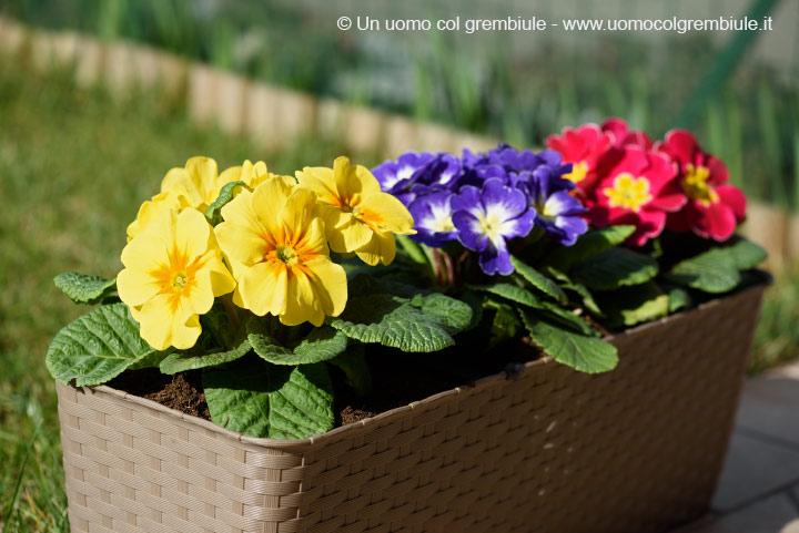 Fiori da piantare in giardino a primavera - Fiori da giardino primavera estate ...